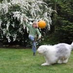 Boy playing ball with dog in yard