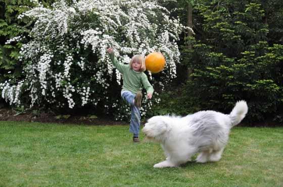 Boy playing ball with dog in yard